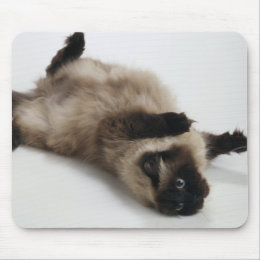 Himalayan Cat Lying on his Back Mouse Pad