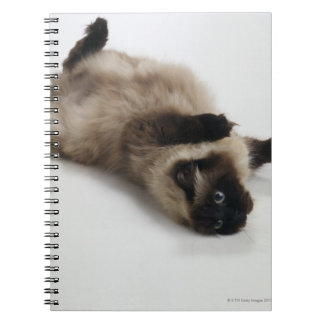 Himalayan Cat Lying on his Back Note Book