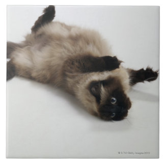 Himalayan Cat Lying on his Back Tile