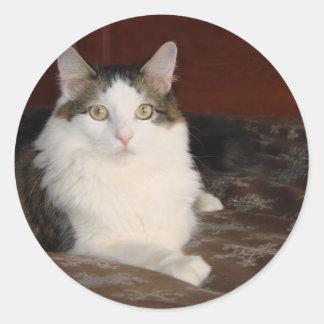 Himalayan Cat Princess Classic Round Sticker