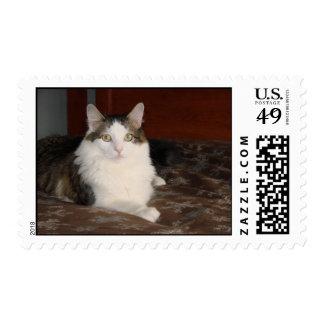 Himalayan Cat Princess Postage Stamp