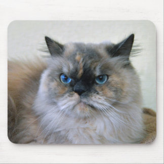 Himalayan Cat with Blue Eyes Mouse Pad