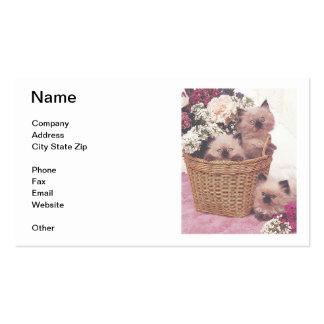 Himalayan Kittens Business Card