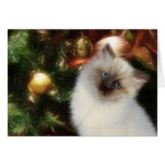 Himalayan kitty Christmas Card