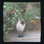 """Himalayan Mix Cat Bandana<br><div class=""""desc"""">add text or upload your own image</div>"""