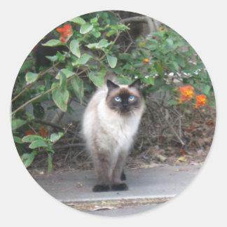 Himalayan Mix cat Classic Round Sticker