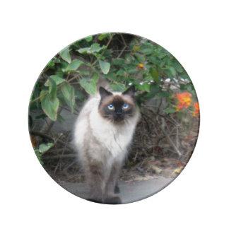 Himalayan Mix Cat Plate