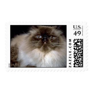 Himalayan Postage Stamp