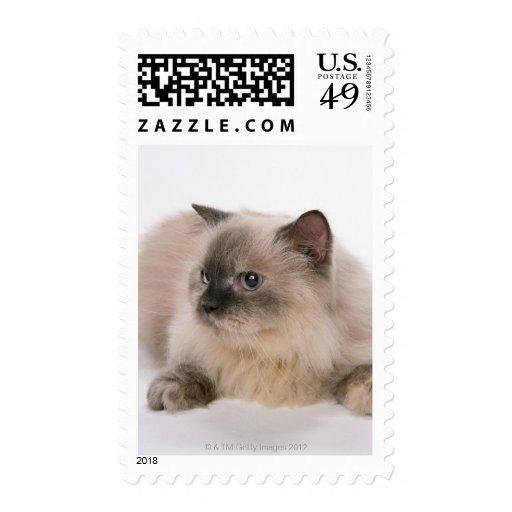 Himalayan Postage Stamps