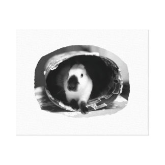 Himalayan Rabbit BW Photo in round can Stretched Canvas Prints