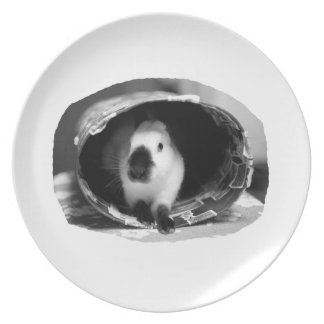 Himalayan Rabbit BW Photo in round can Dinner Plate