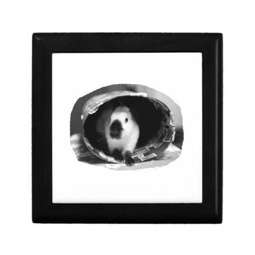 Himalayan Rabbit BW Photo in round can Jewelry Boxes