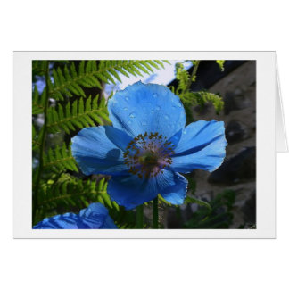 Himilayan Blue Poppy Card