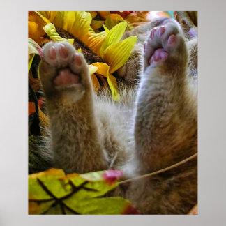 Hinche encima del gatito del gato del gatito del ~ poster