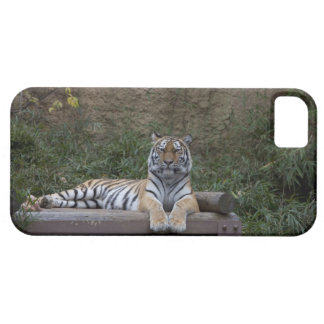 Hino Tokyo Prefecture Japan iPhone 5 Cases