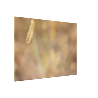 Hint Of Nature Photography Art Stretched Canvas Print