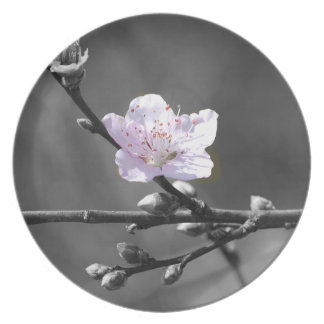 Hint of Pink Cherry Blossom Party Plate