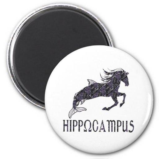 Hipocampo Iman