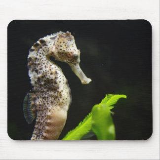 Hipocampo Tapete De Ratón