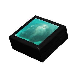 Hipopótamo debajo de la caja de regalo del agua