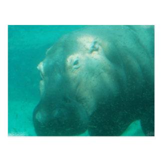 Hipopótamo debajo de la postal del agua