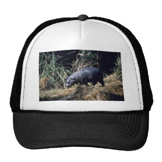 Hipopótamo-pequeño becerro enano gorro