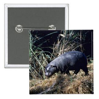 Hipopótamo-pequeño becerro enano pin cuadrado