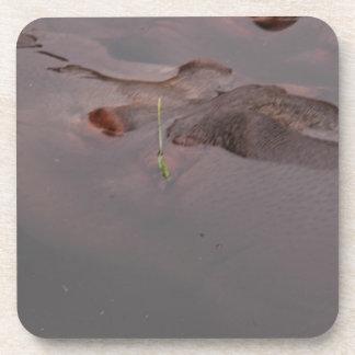 Hipopótamo Posavasos De Bebida