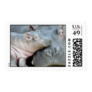Hipopótamo Sellos