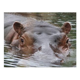 Hipopótamo Postal