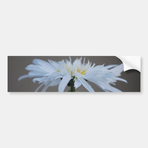 Hippie daisy and meaning car bumper sticker