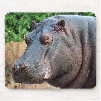 hippo10x10 tapete de ratón