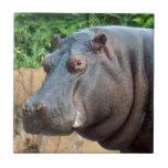 hippo10x10 tejas
