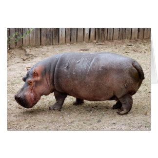 hippo2-1 card
