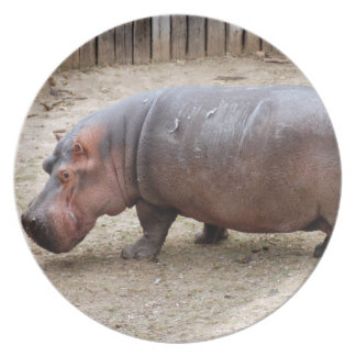 hippo2-1 party plate