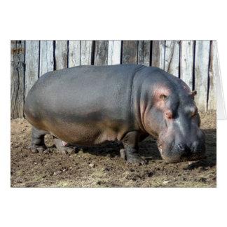 hippo2-2 card