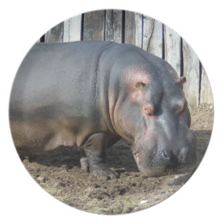 hippo2-2 party plate