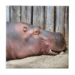 hippo2-3 teja cerámica
