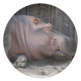 hippo2-4 party plate