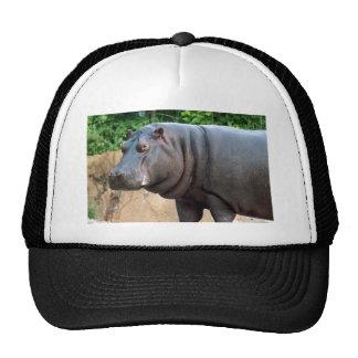 Hippo4x6 Trucker Hat