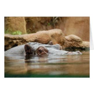 hippo-1 card