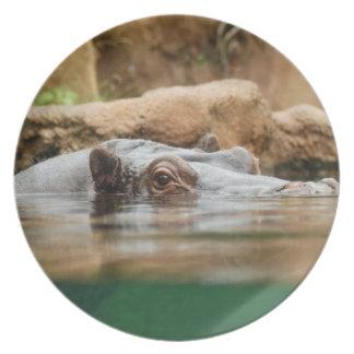 hippo-1 dinner plates