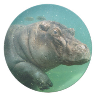 hippo-2 party plate