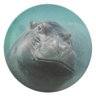 hippo-3 plate