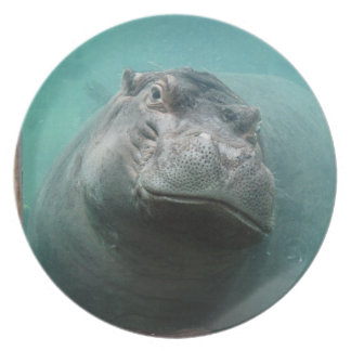 hippo-3 plates
