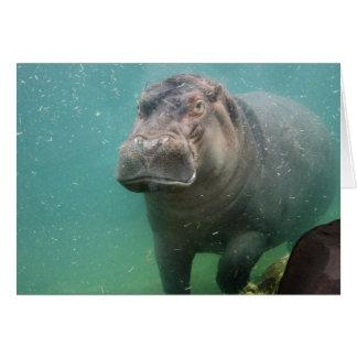 hippo-4 card