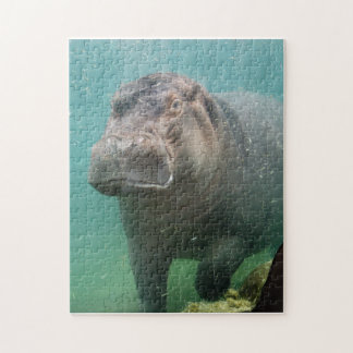 hippo-4 jigsaw puzzle