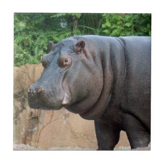 hippo-6 azulejo cuadrado pequeño