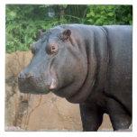 hippo-6 azulejos