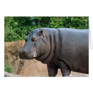 hippo-6 card